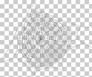 Spider Web Spider Silk PNG