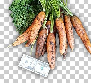 Animal Source Foods Vegetable Carrot PNG