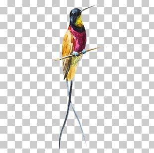 Bird Condominio Sol Del Llano Art Finca Montania Sagrada Owl PNG
