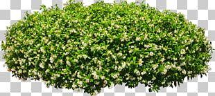 Neem Tree Shrub Garden Paper PNG