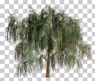 Willow Tree Branch Biome PNG