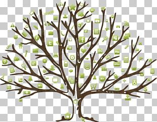 Coloring Book Leaf Tree Autumn Drawing PNG