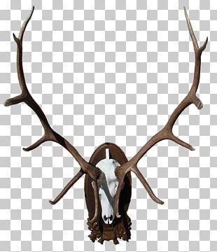 Elk Deer Moose Horn Antler PNG