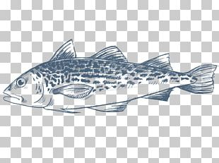Sardine Salmon Cod Fish Products PNG