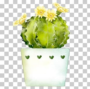 Watercolor Painting Cactaceae PNG