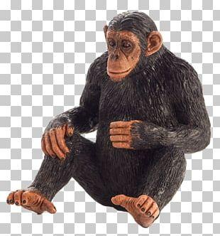 Common Chimpanzee Primate Monkey Gorilla Knuckle-walking PNG