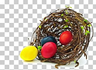 Edible Birds Nest Bird Nest Egg PNG