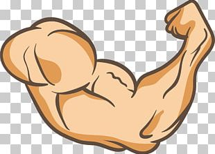 Arms Thumb Muscle PNG