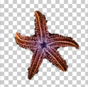 Starfish Beach Sea Sand PNG