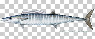 Recreational Fishing Wahoo Trolling Game Fish PNG