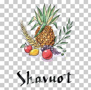 Shavuot Sukkot Jewish Holiday PNG