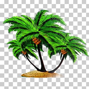Arecaceae Coconut Tree Euclidean PNG