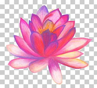 Drawing Flower Line Art Sketch PNG