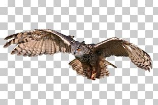Great Horned Owl Bird Tawny Owl Eurasian Eagle-owl PNG