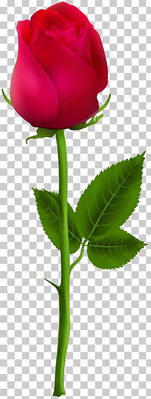 PicsArt Photo Studio Editing PNG