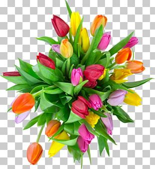 Tulip Photography Flower Bouquet PNG