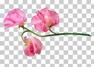 Garden Roses Flower Portable Network Graphics PNG