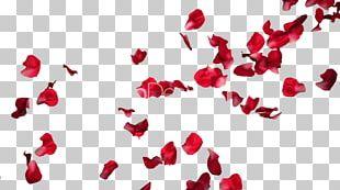 Rose Petal Flower PNG