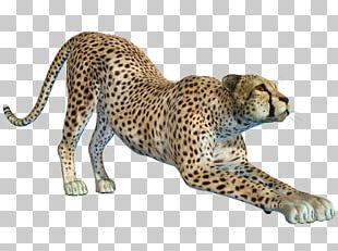 Cheetah Leopard Jaguar PNG