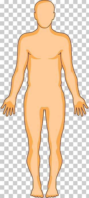 Human Body Organ Homo Sapiens Anatomy Human Skin PNG