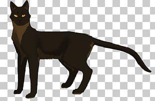 Cat Fading Echoes Warriors Spiderleg Ivypool PNG
