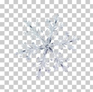 Winter Petal Ice Pattern PNG