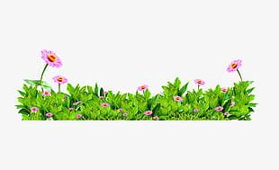 Decorative Patterns Of Green Flowers PNG