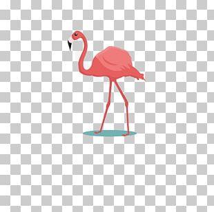 Flamingos Bird Common Ostrich Parrot Cartoon PNG