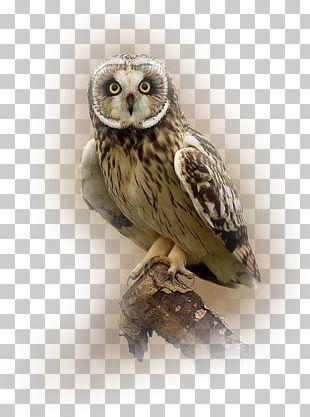 Great Grey Owl Bird Tawny Owl Short-eared Owl PNG