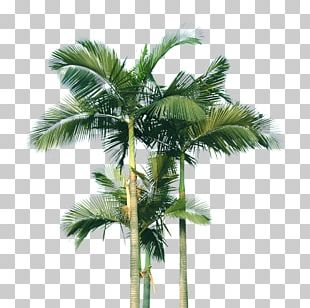 Coconut Scalable Graphics Arecaceae Computer File PNG