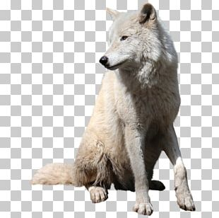 Gray Wolf Tutorial PNG