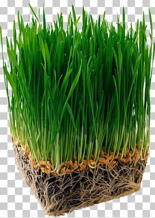 Juice Organic Food Barley Wheatgrass Nutrition PNG