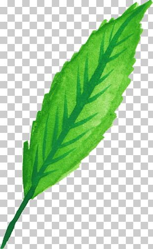 Peppermint Leaf Herb Watercolor Painting PNG
