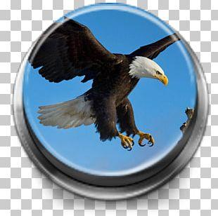 Bald Eagle Bird Desktop 1080p PNG