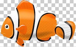 Fish Diagram PNG