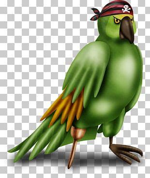 Bird Parakeet Macaw Cartoon PNG