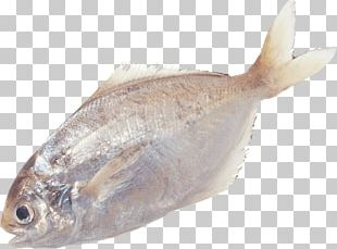 Bony Fishes Portable Network Graphics PNG