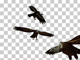 Bald Eagle Buzzard Hawk Vulture PNG