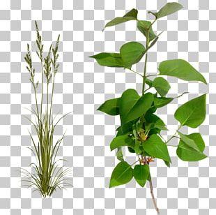 Flowerpot Plant Stem Leaf Herb PNG