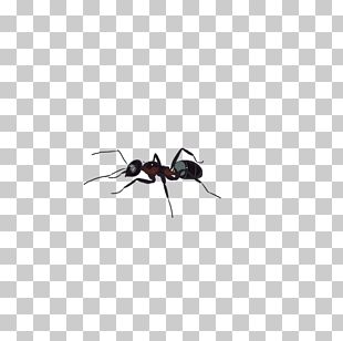 Black Garden Ant Insect Tupolev ANT-2 PNG