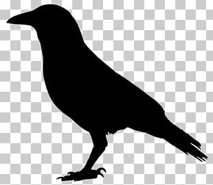 Crow Drawing PNG