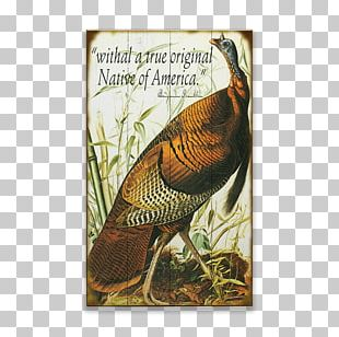 The Birds Of America Turkey Galliformes National Audubon Society PNG