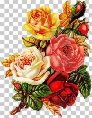 Garden Roses Centifolia Roses Beach Rose Flower Bouquet PNG