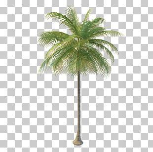 Arecaceae Coconut Water Tree Nata De Coco PNG