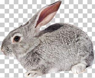 Domestic Rabbit European Rabbit Hare Fur PNG