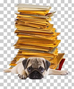 Pug Photography Mail Paper Envelope PNG