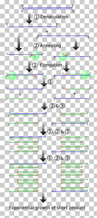Realtime Polymerase Chain Reaction PNG Images, Realtime