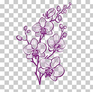 Hand Painted Purple Orchid PNG