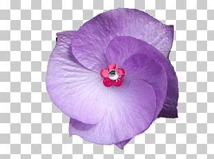 Violet Flower Purple Accesso PNG