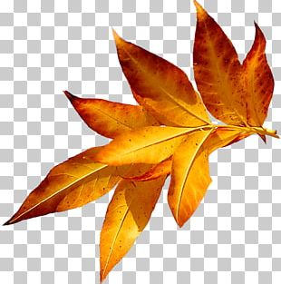 Autumn Leaves Maple Leaf Я PNG